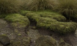 Imagen Corrales de Pesca y Conchales Arqueológicos ubicados en la Isla Chala
