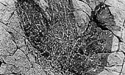 Imagen Quebrada de Chacarilla