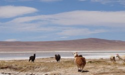 Imagen Salar de Huasco